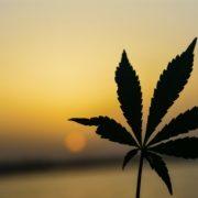 marijuana legalization and security in toronto